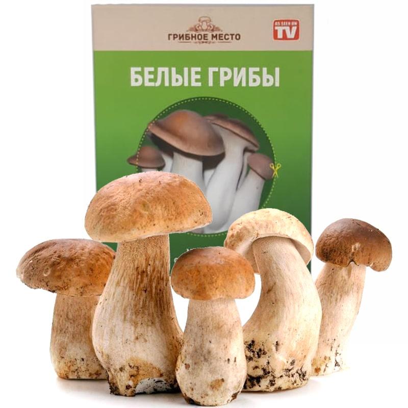 набора домашних грибов